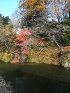 Photo_17-11-08-15-11-58.754